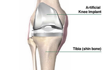 Knee Anatomy and Function